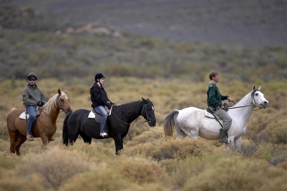 horsesafari1_custom_2.jpg